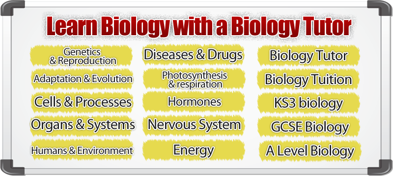 biology tutor online Biology tutoring - our online biology courses are designed to give students a good understanding of fundamental biology facts and principles the highly competent online tutors at growing.